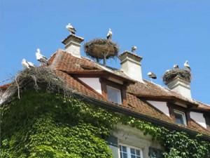 Störche Dach Dominik Efinger