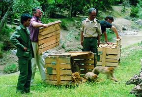 Auswilderung von Berberaffen