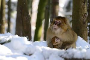 Bab ymit Männchen im Winter