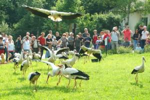 Lobbyarbeit für den Storchenschutz