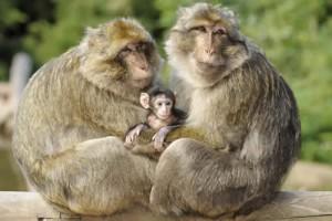 zwei Männchen mit Baby